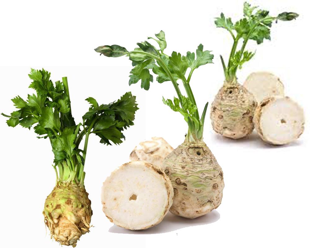 Celery vs Celery Root b