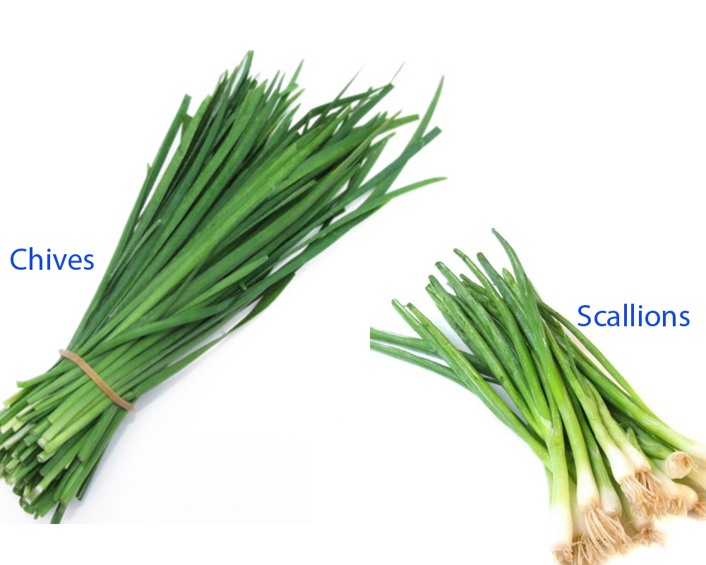 Chives vs Scallions 5