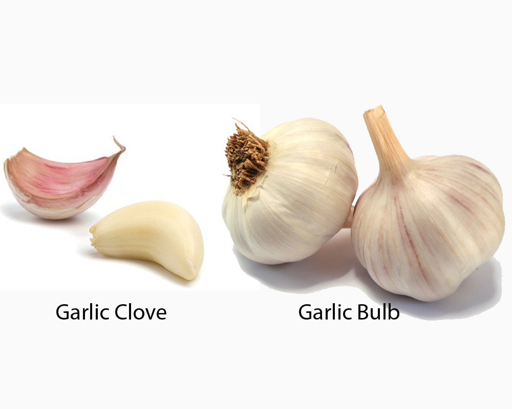 Garlic Clove vs Bulb 1