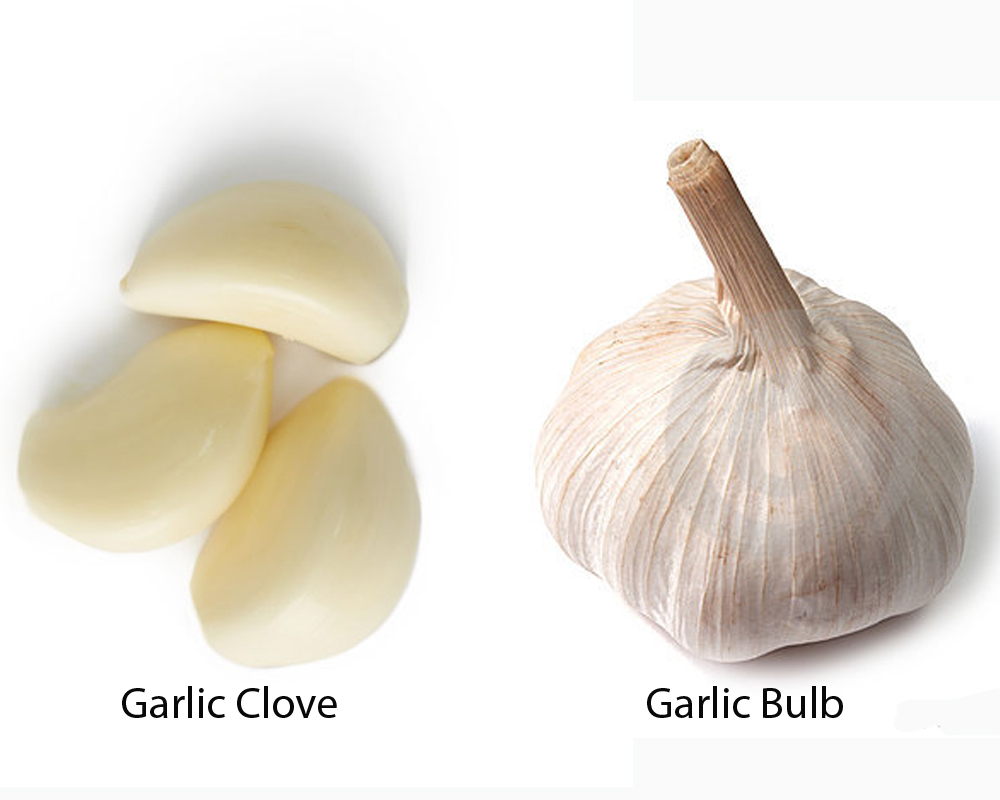 Garlic Clove vs Bulb 2