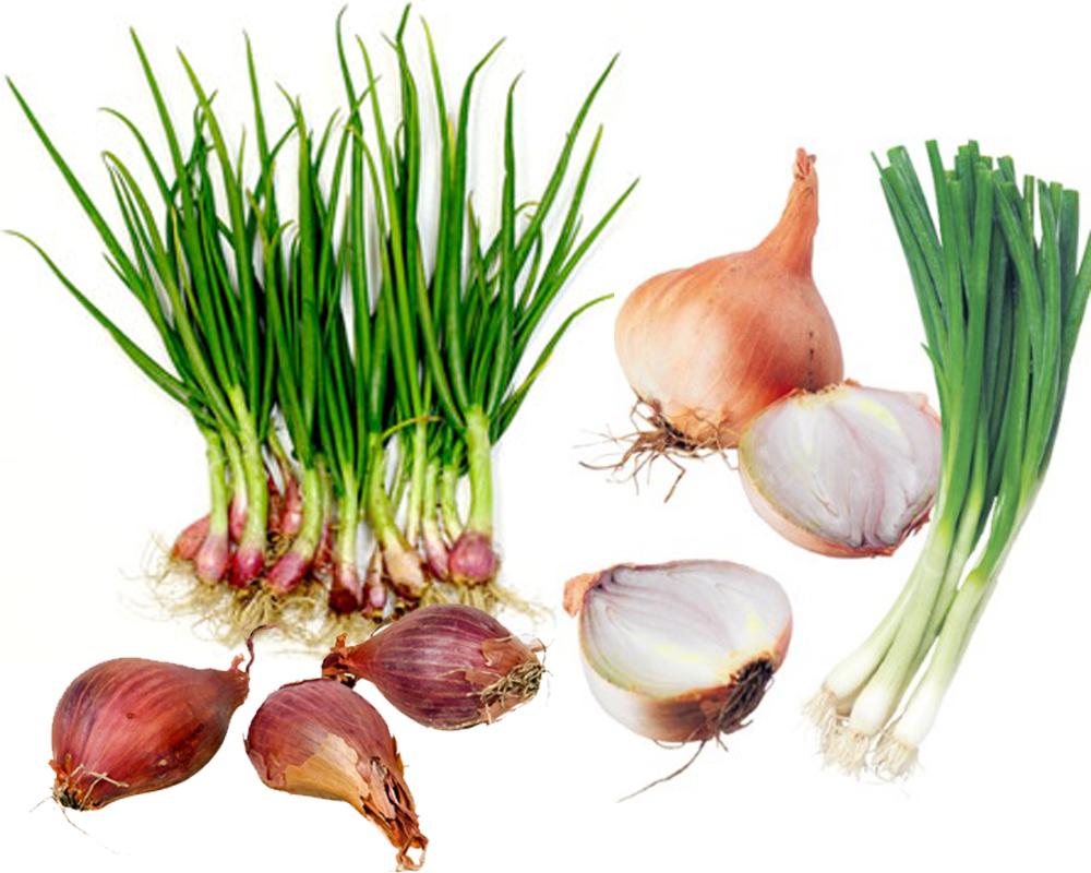 Green Onions vs Shallots b