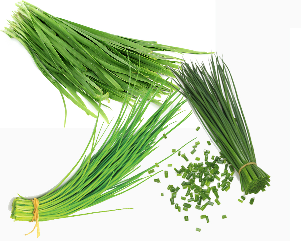 chives-vs-green-onions-a