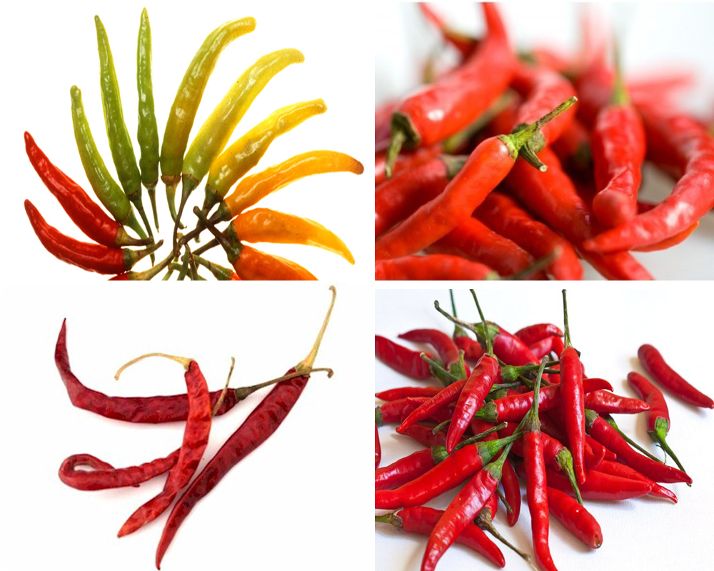 chiles-vs-peppers-3