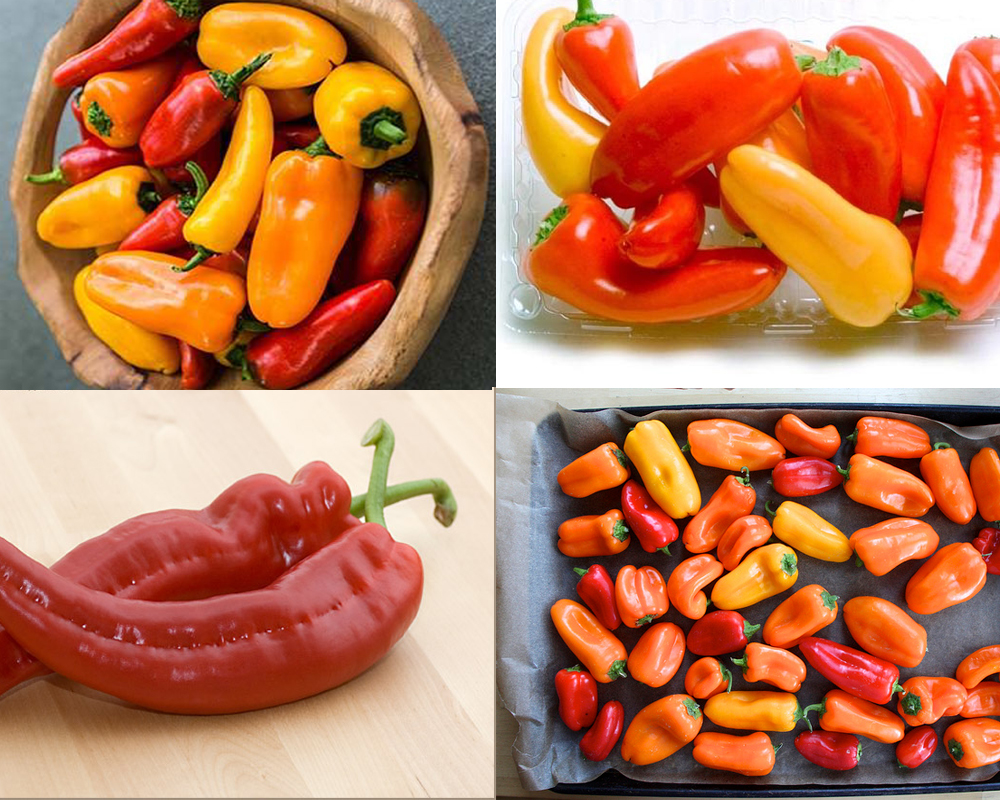 chiles-vs-peppers-4