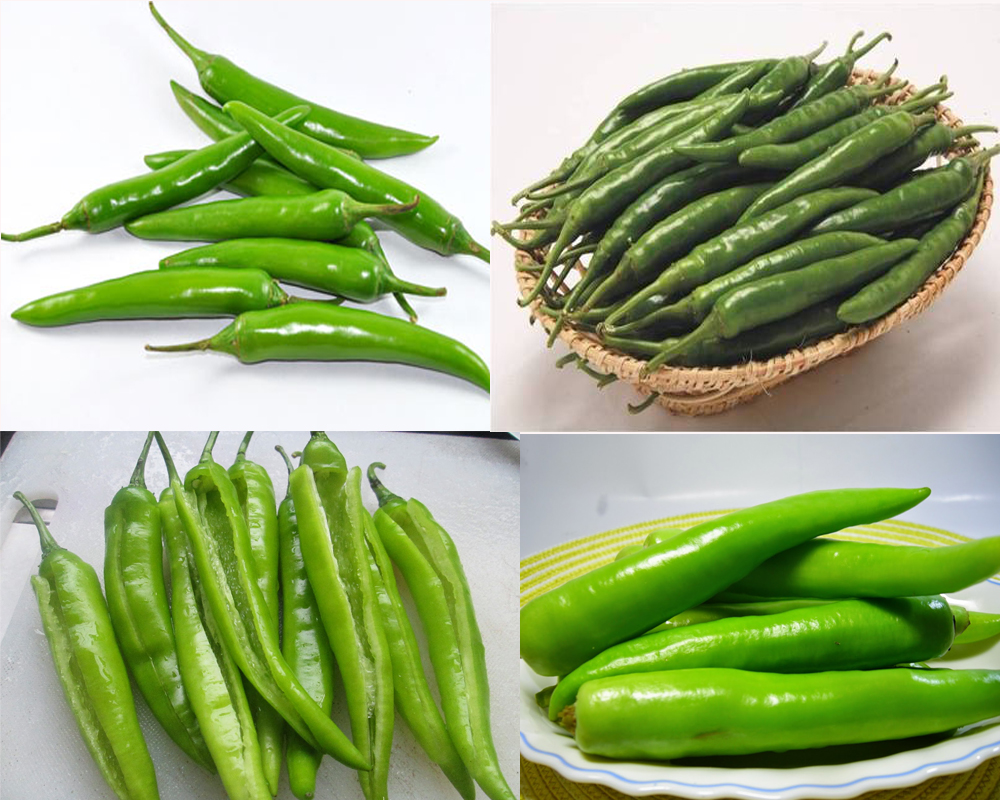 green-chiles-vs-jalapenos-3