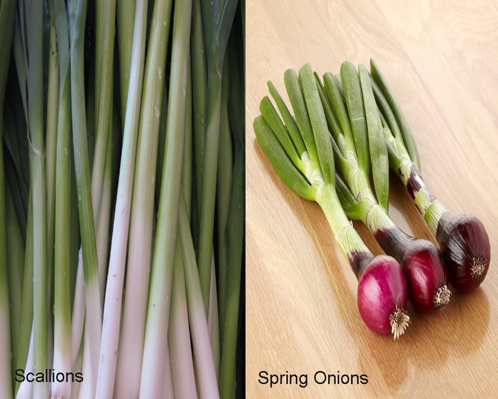 scallions-vs-spring-onions-2