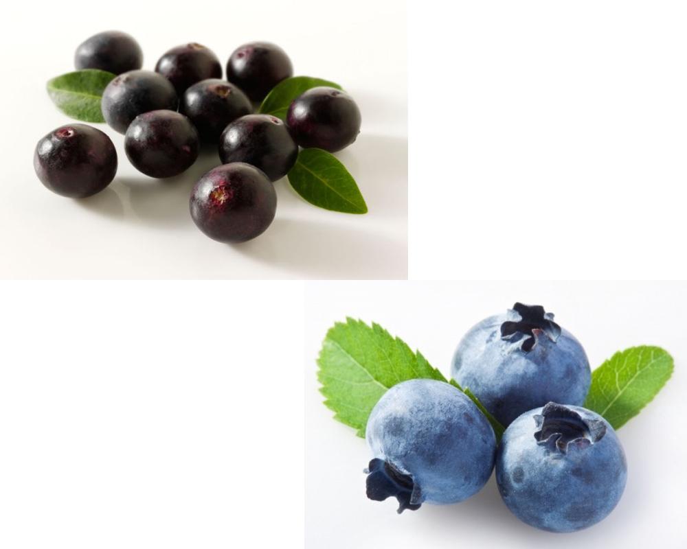 bilberry-vs-blueberry-1