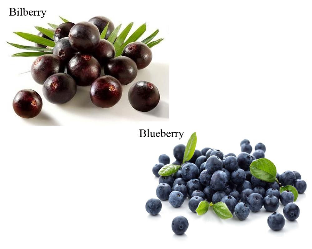 bilberry-vs-blueberry-2