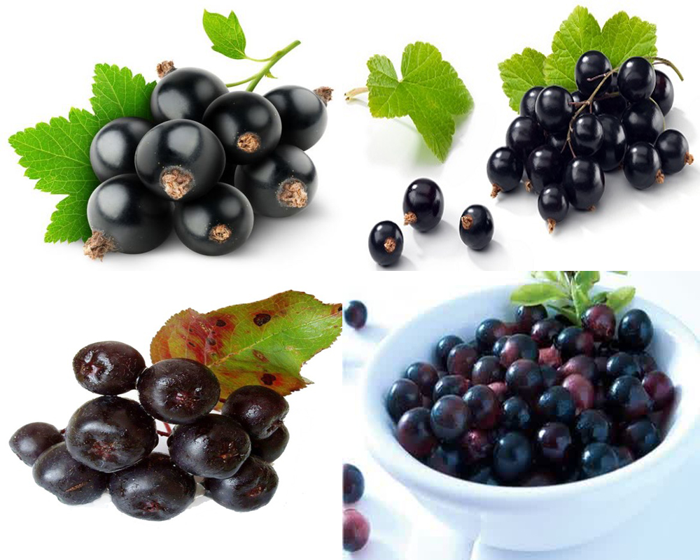 bilberry-vs-blueberry-3