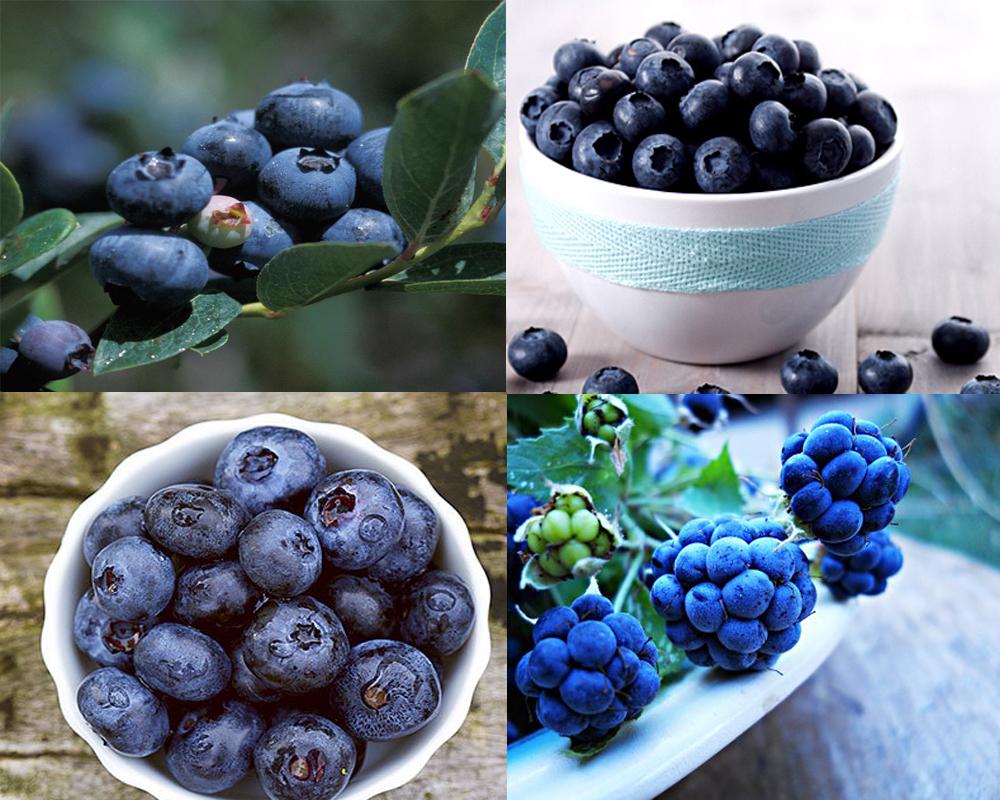 bilberry-vs-blueberry-4
