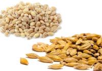 pearl barley vs hulled barley