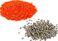 red lentils vs green lentils