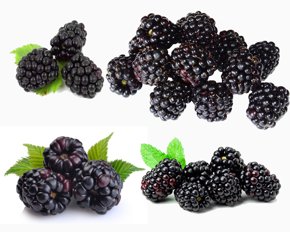 Black Raspberry vs Blackberry b
