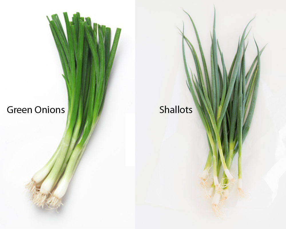 Green Onions vs Shallots 1