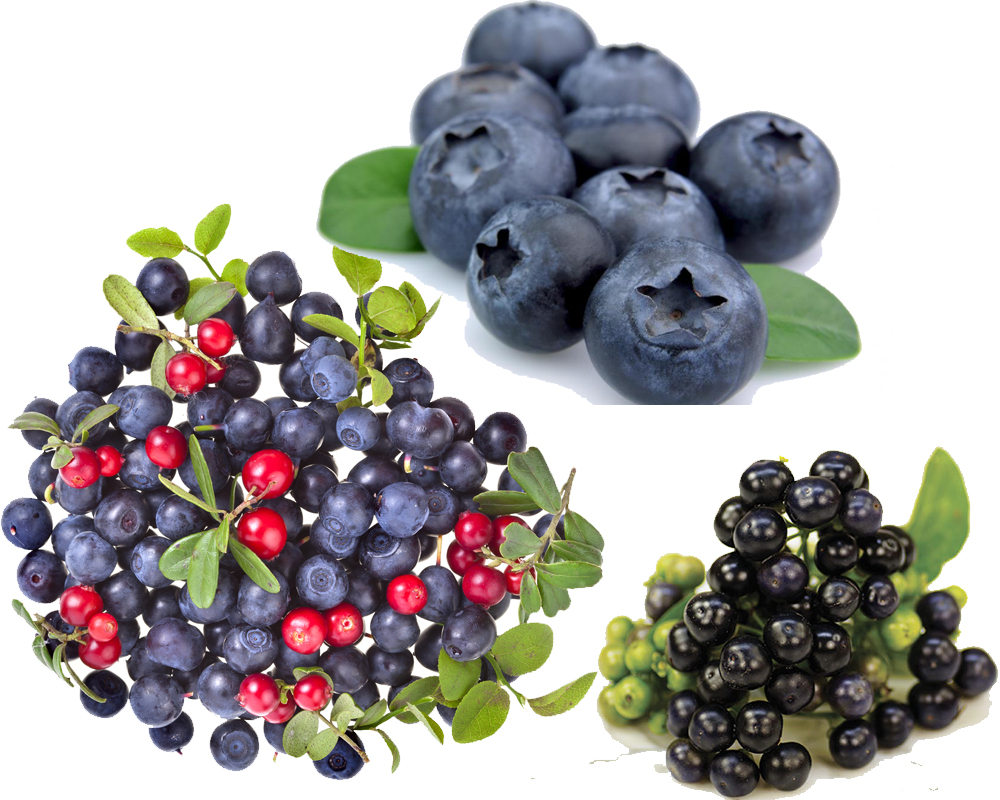 Huckleberry vs Blueberry a