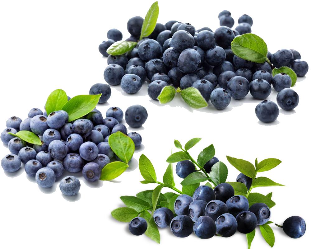Huckleberry vs Blueberry b