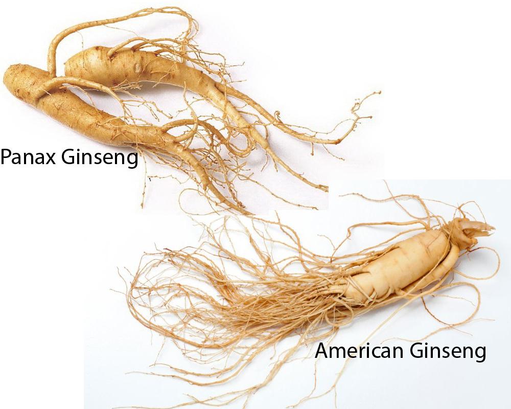 Panax Ginseng vs American Ginseng 1