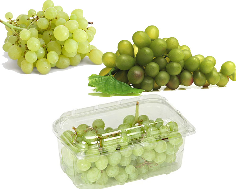 Red Grapes vs Green Grapes b