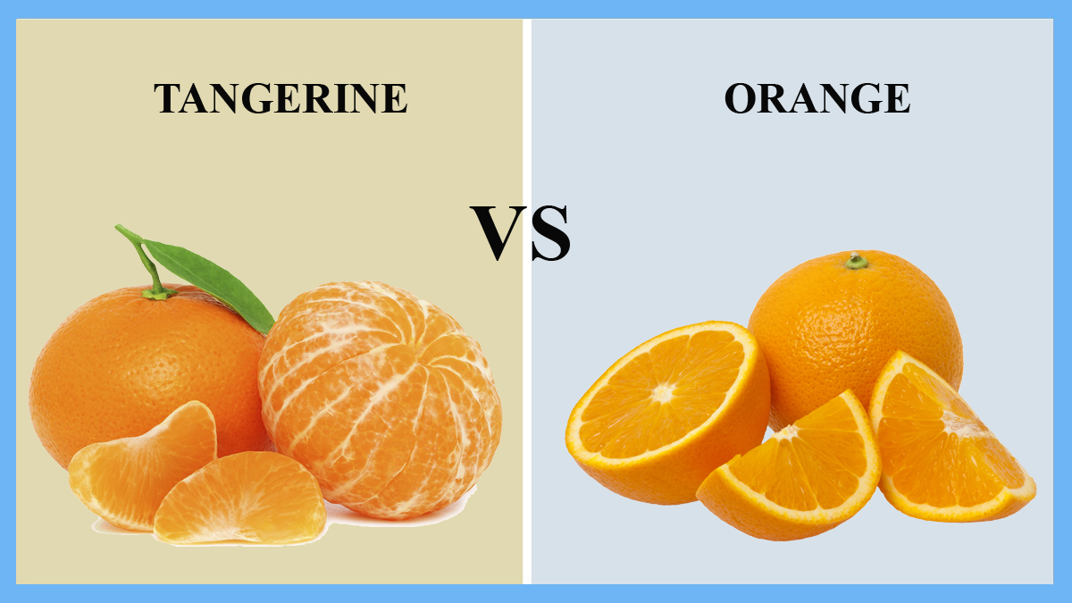 Tangerine vs Orange | thosefoods.com