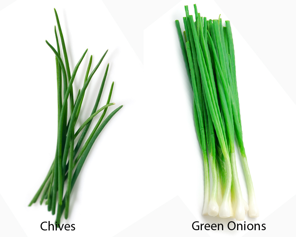 chives-vs-green-onions-1