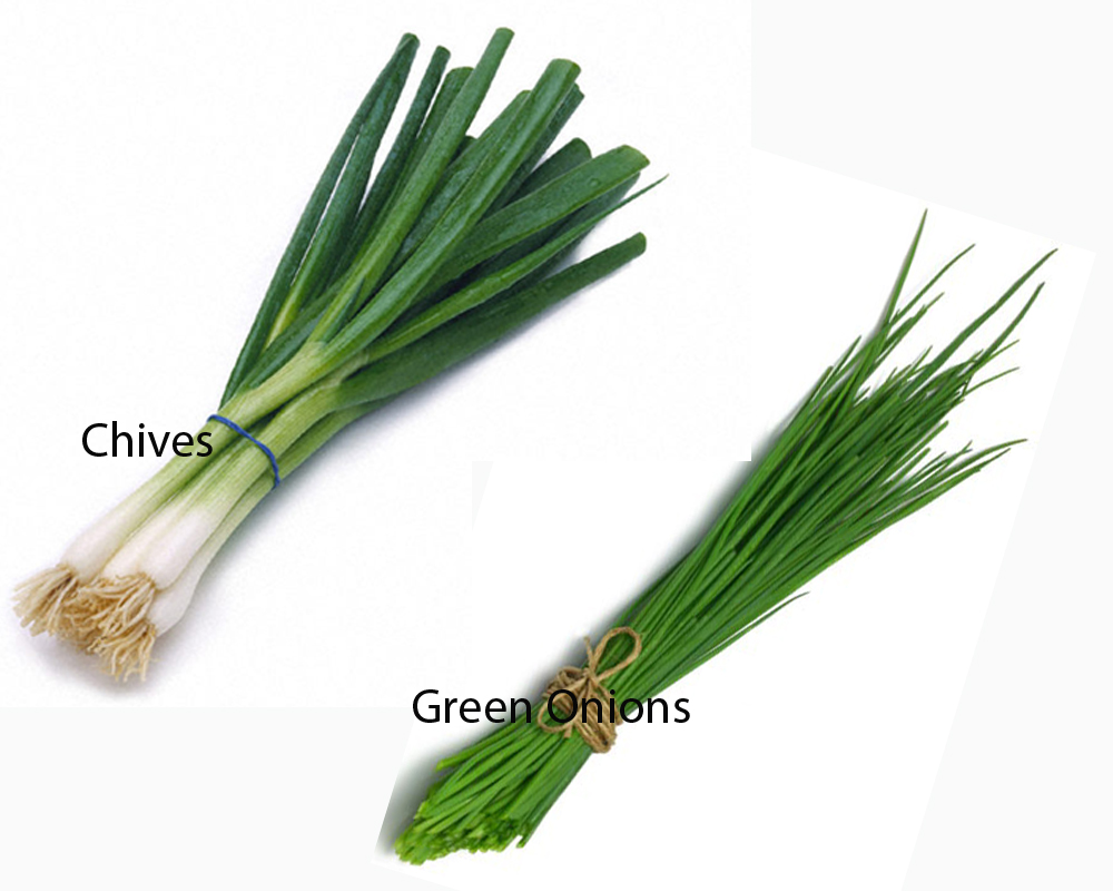 chives-vs-green-onions-2