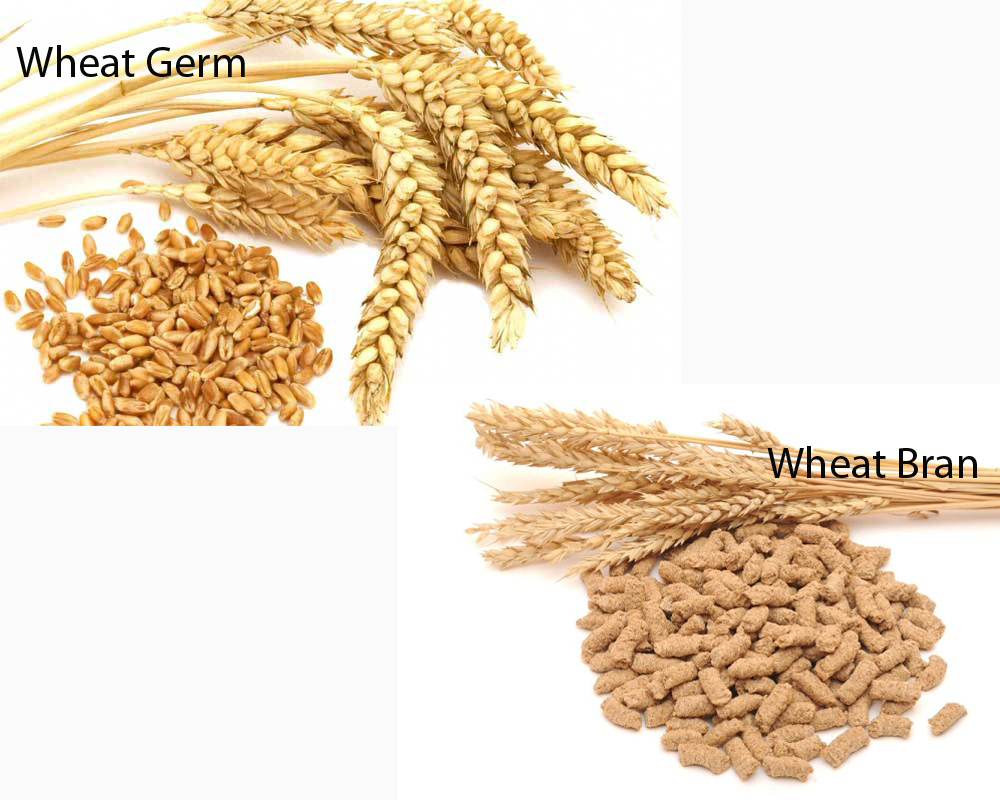 Wheat Germ vs Wheat Bran 2