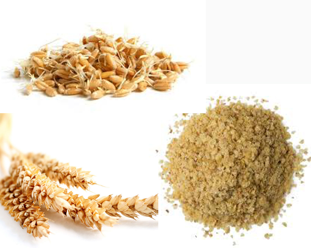 Wheat Germ vs Wheat Bran a