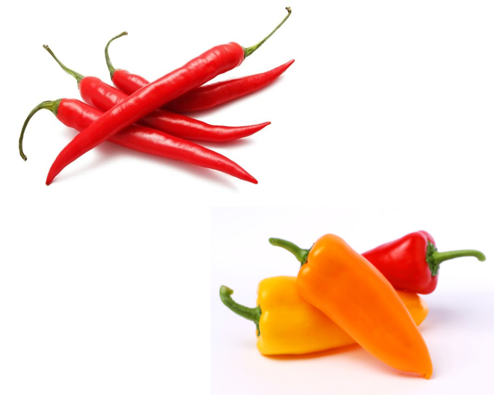 chiles-vs-peppers-1