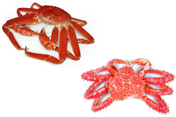 Snow Crab vs King Crab