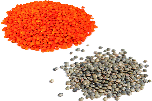 red lentils vs green lentils